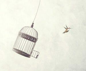 Vogel, der aus einem Käfig fliegt